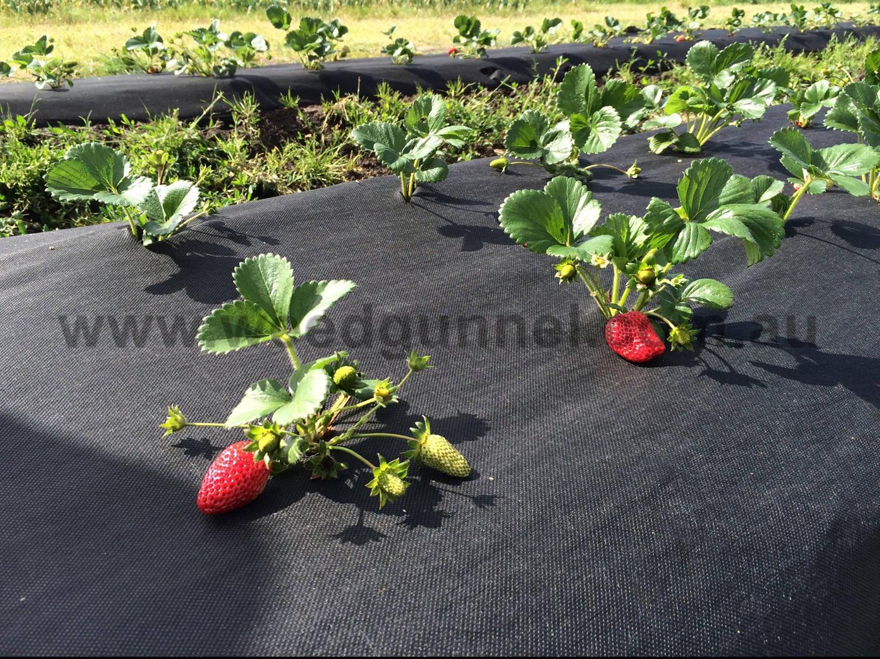 Weed Mats Permeable Weed Mat Pre Cut Weed Mat Weed